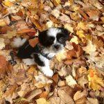 Daisy Prepares for Fall